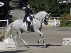 Foto Dressage Horse Collection CDI 3*